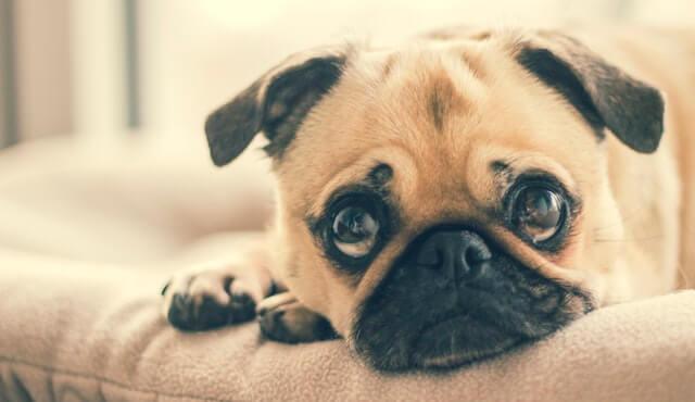Canna Pet Anxious Dog