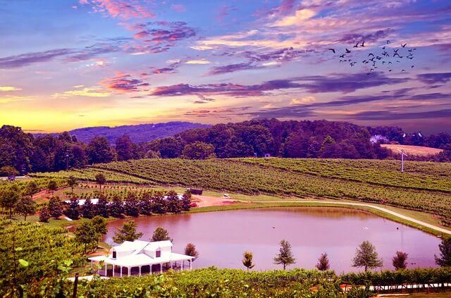 Napa Valley Vineyard Wine Tasting