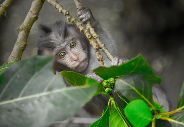 Aquarius Bali Monkey Temple