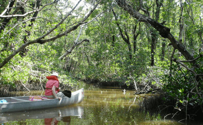 Southern Everglades Vacation