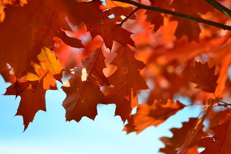 10 Ways to Use Changing Leaves in DIY Crafts with your Kids